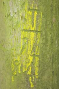 08.'T 71', digital image