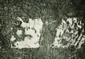 34. 'tree hide', digital image